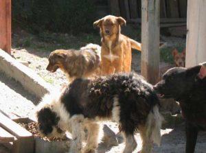 За кучетата НЕхуманно