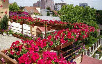 Цветна София и тази пролет пред НДК